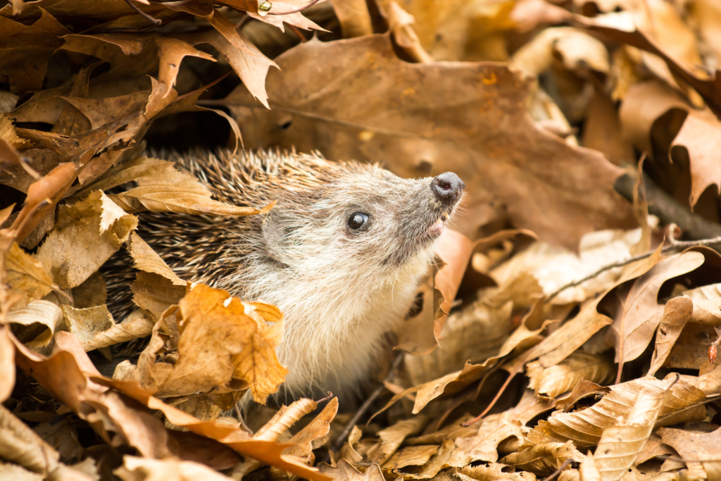 aider animaux jardin - abri hérissons dorloteurs